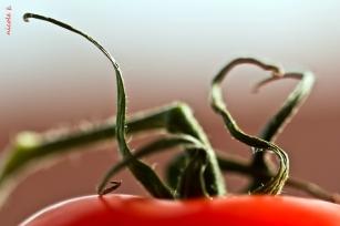 comp_tomate